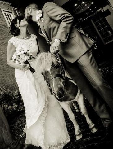 wedding-pony